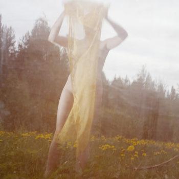 Teoksen nimi: Voikukkapelto, 2013