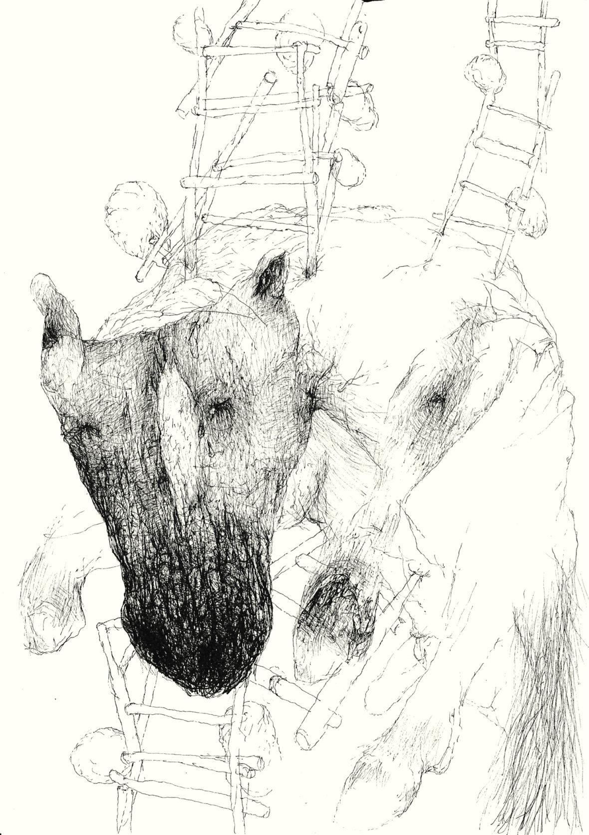 Blind pony
