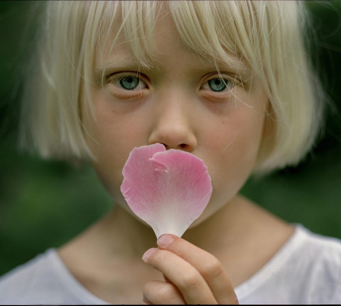Pionin terälehti, 2004 / A peony petal, 2004
