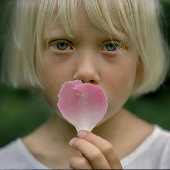 Teoksen nimi: Pionin terälehti, 2004 / A peony petal, 2004