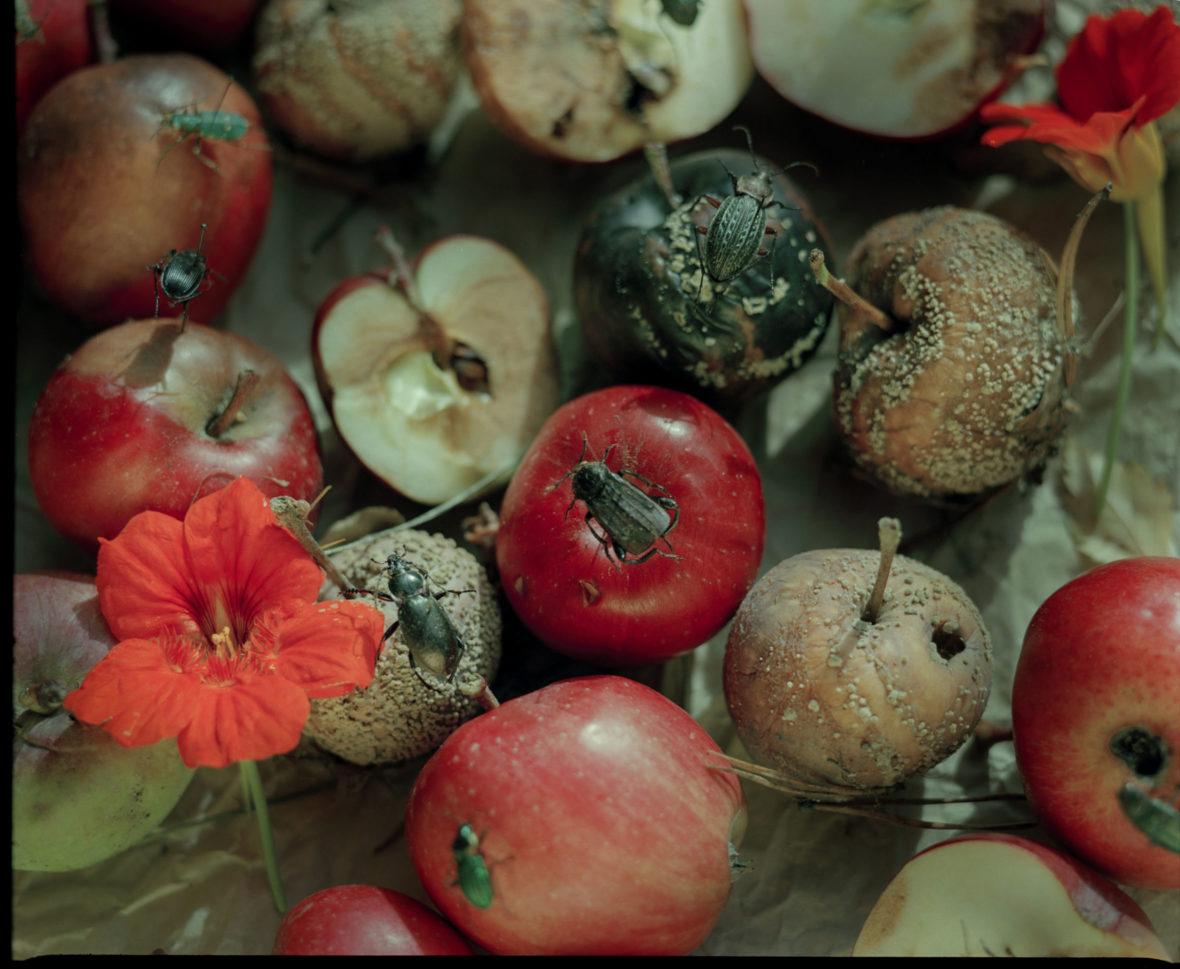 Omenat I, 2001 / Apples I, 2001