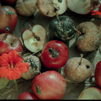 Teoksen nimi: Omenat I, 2001 / Apples I, 2001
