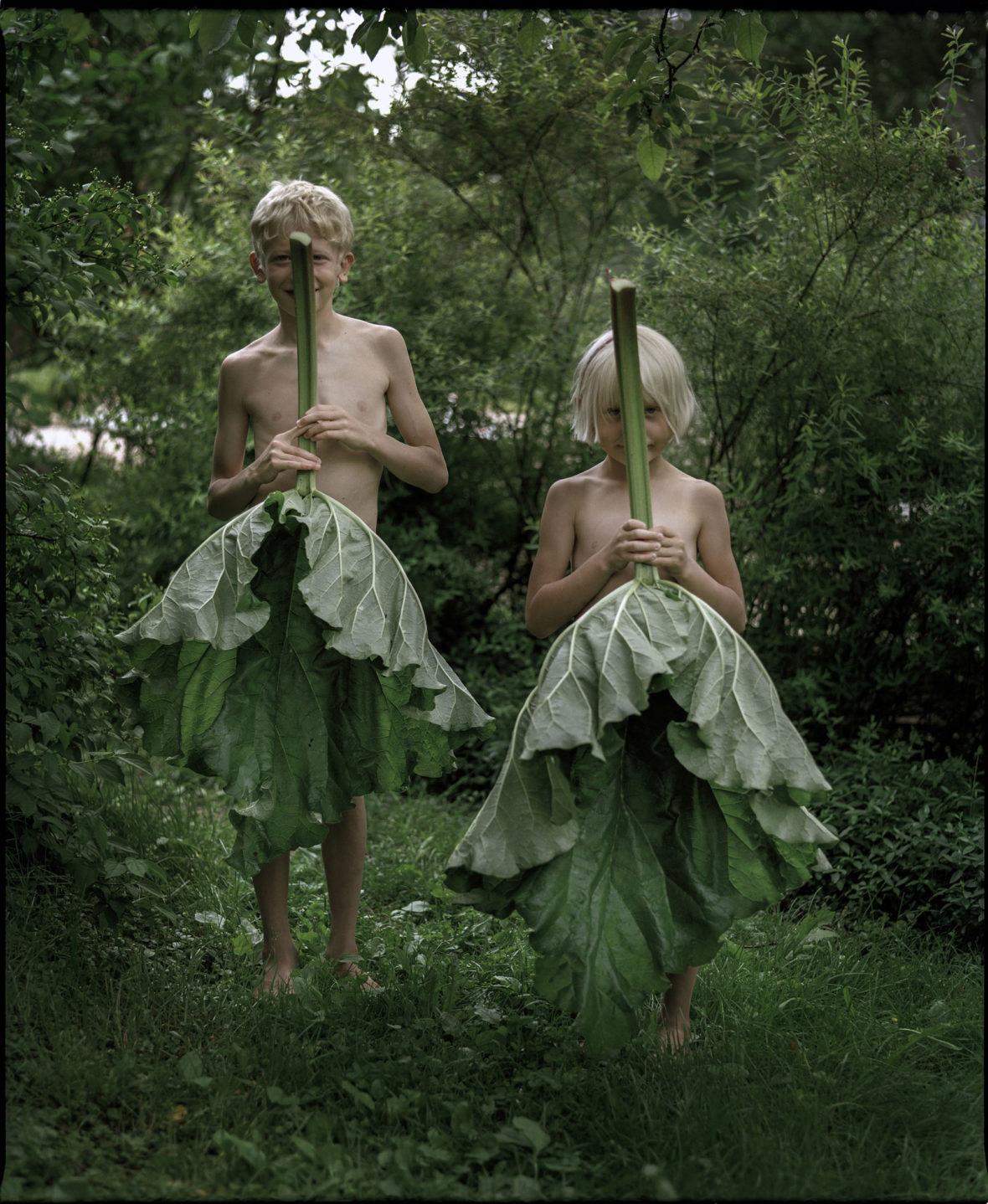 Raparperinlehdet, 2004 / Rhubarb leaves, 2004
