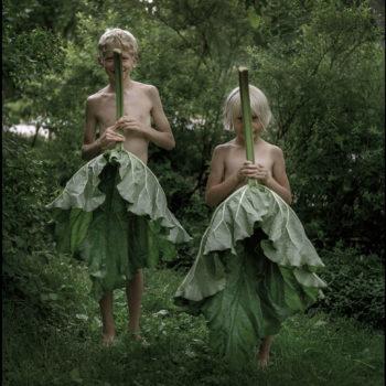 Teoksen nimi: Raparperinlehdet, 2004 / Rhubarb leaves, 2004