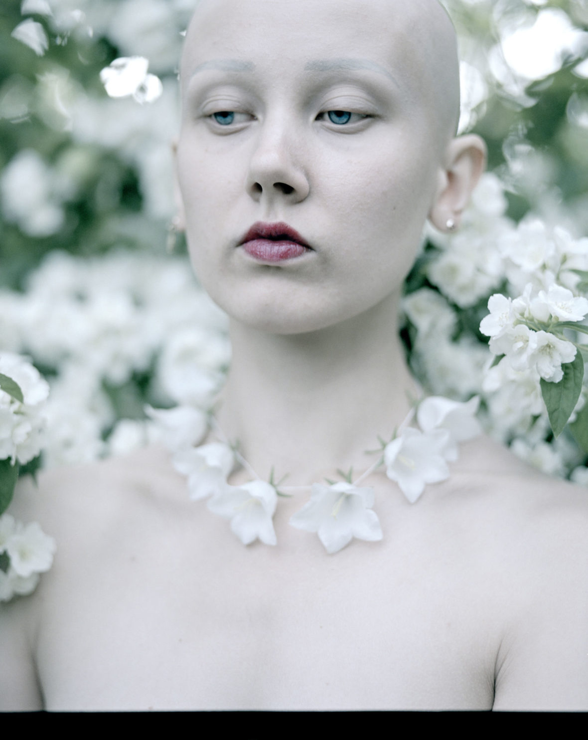 Valkoiset kellokukat, 2019 / White bellflowers, 2019