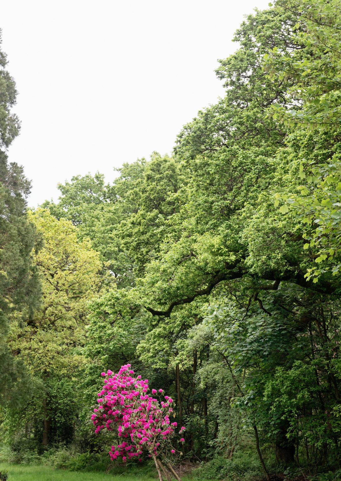 Pink Tree, Falkirk