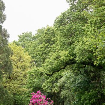 Teoksen nimi: Pink Tree, Falkirk