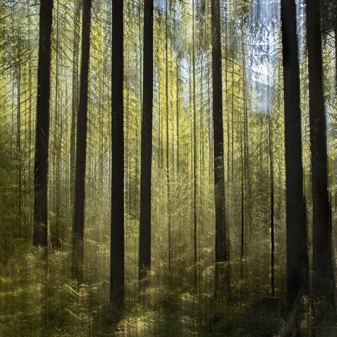 Vihreä Metsä / Green Forest