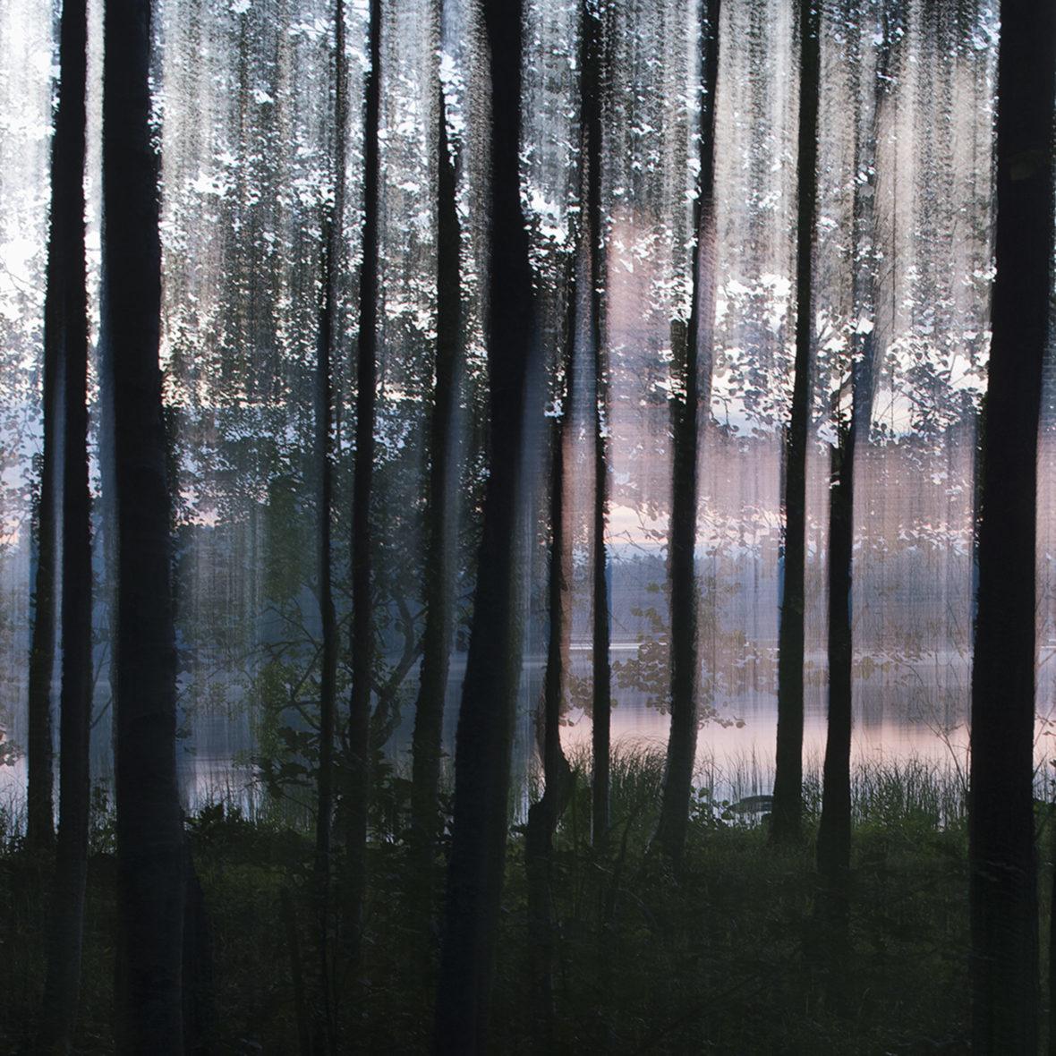 Rantapuut II / Waterfront Trees II