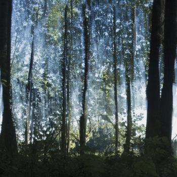 Teoksen nimi: Siniset lehdet II / Blue Leaves II