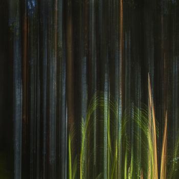 Teoksen nimi: Metsän seinä / Forest Wall