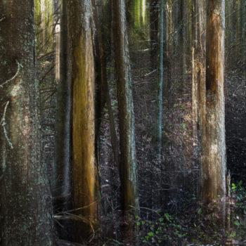 Teoksen nimi: Aarnimetsä I /Ancient Woodland I