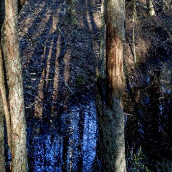 Teoksen nimi: Aarnimetsä II /Ancient Woodland II