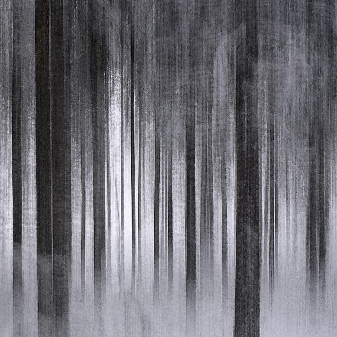 Metsä nukkuu / Sleeping Forest