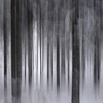 Teoksen nimi: Metsä nukkuu / Sleeping Forest