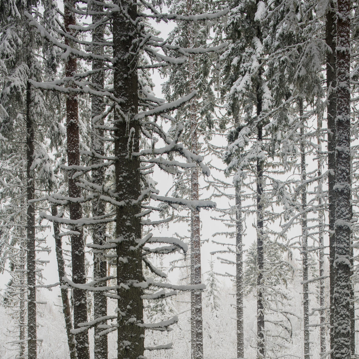 Ensilumi / First Snow