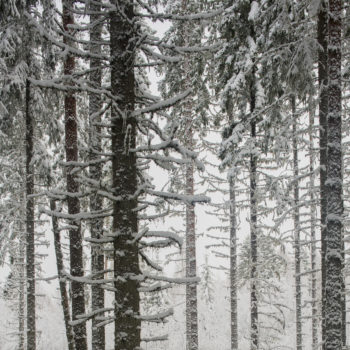 Teoksen nimi: Ensilumi / First Snow