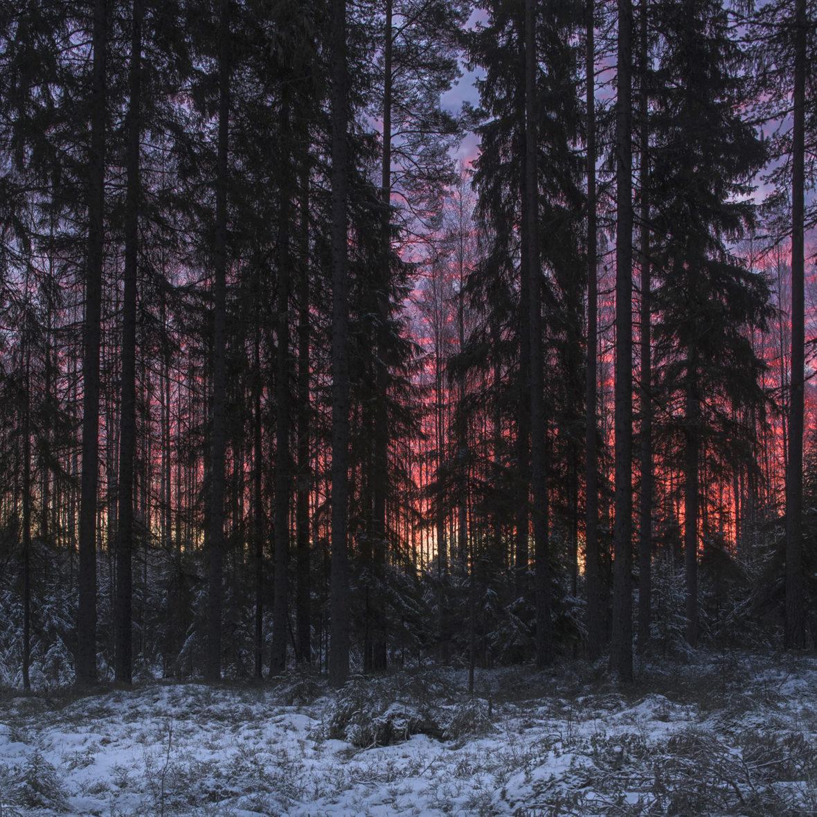 Helmikuun aamu /February Morning