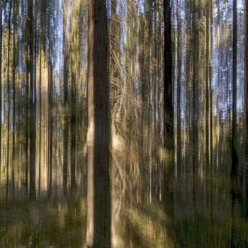 Teoksen nimi: Metsä olioi / Forest Figures