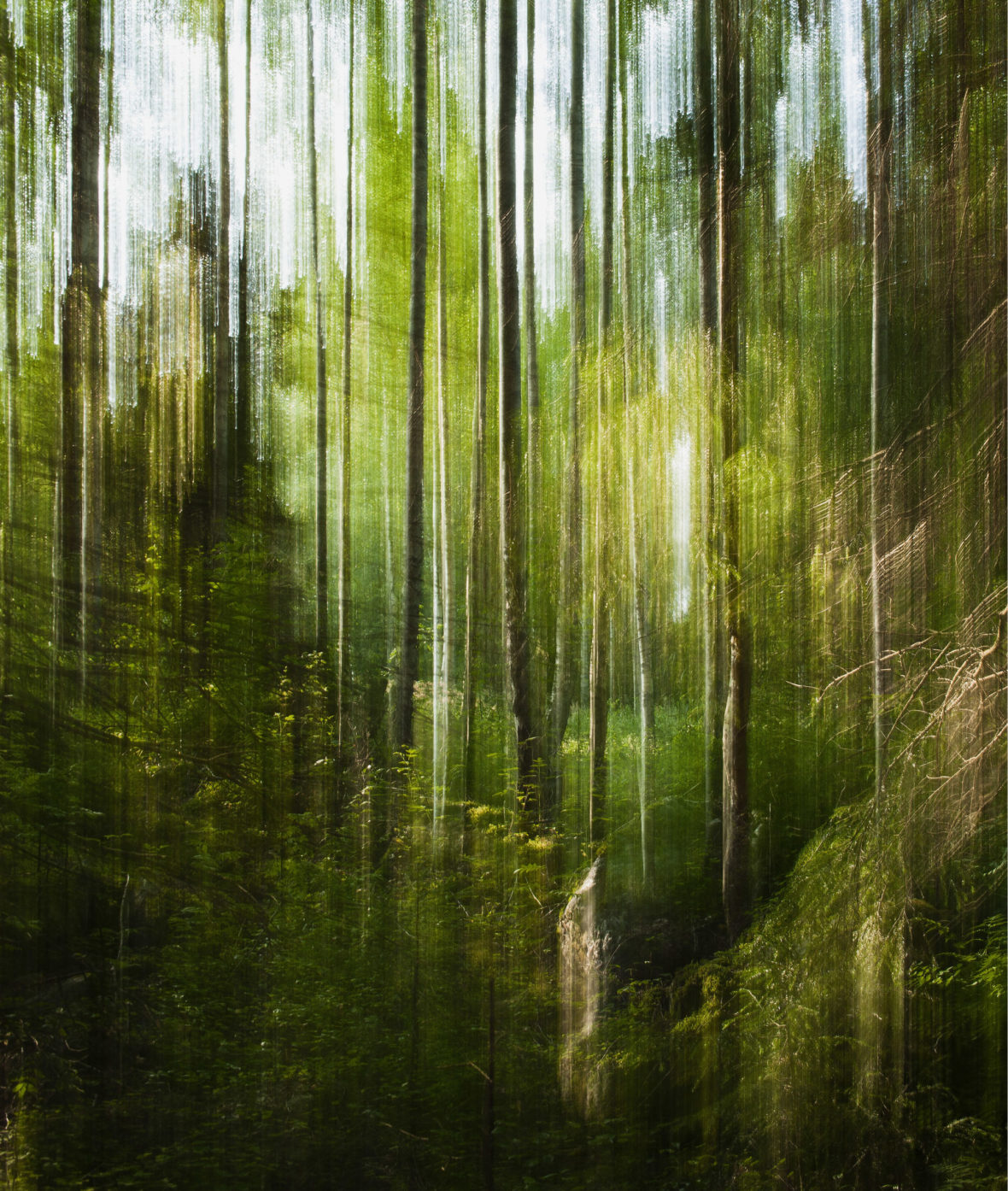 Metsämaisema / Forest Landscape