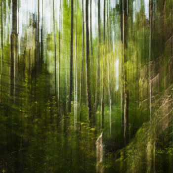 Teoksen nimi: Metsämaisema / Forest Landscape