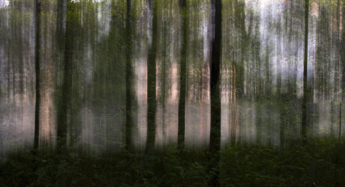Rantapuut / Waterfront Trees