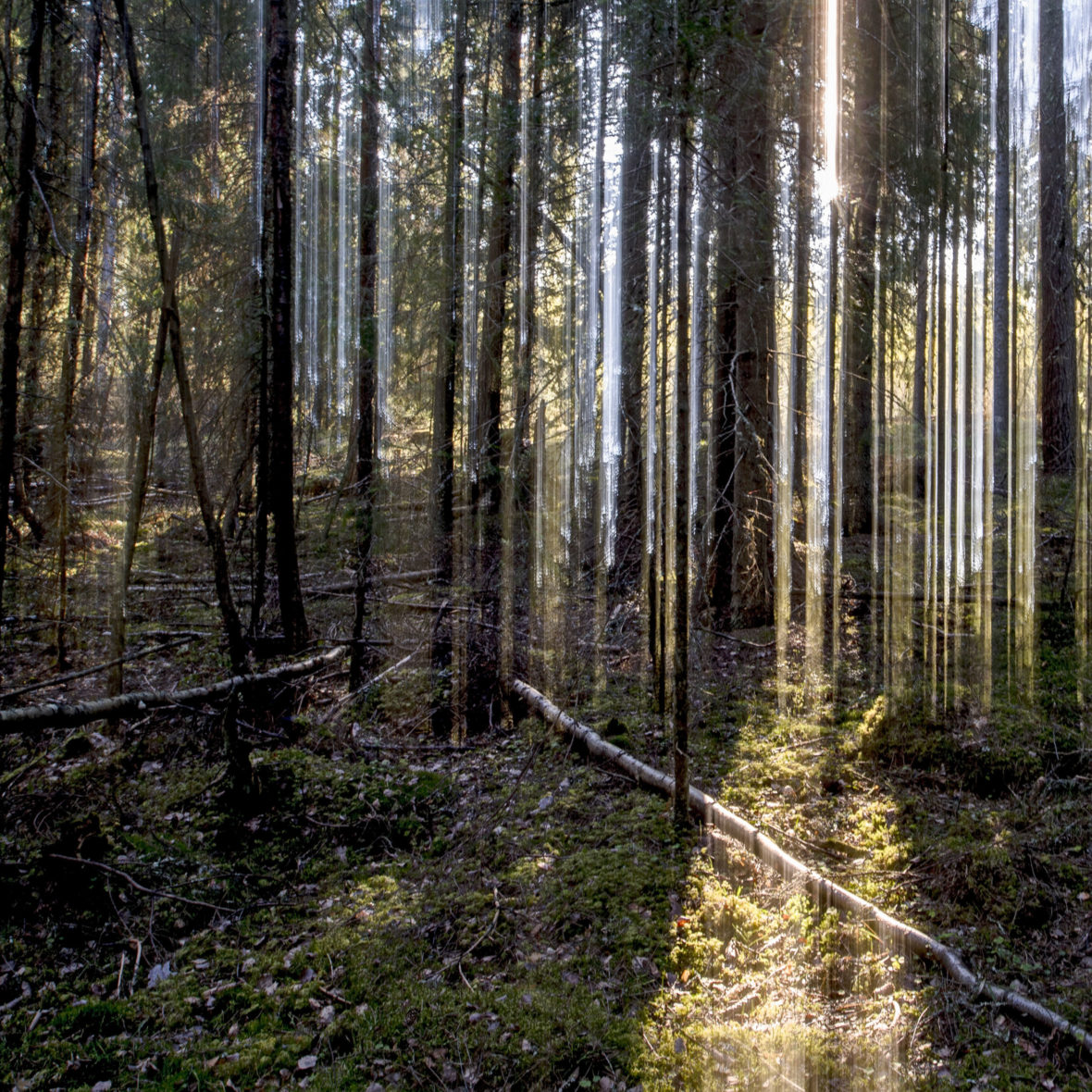 Aamuaurinko / Morning Sun