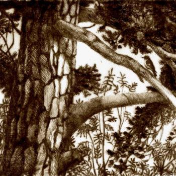 Name of the work: Kirjosieppo