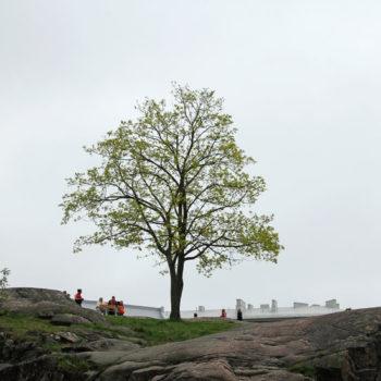 Teoksen nimi: Plants for Free, Helsinki