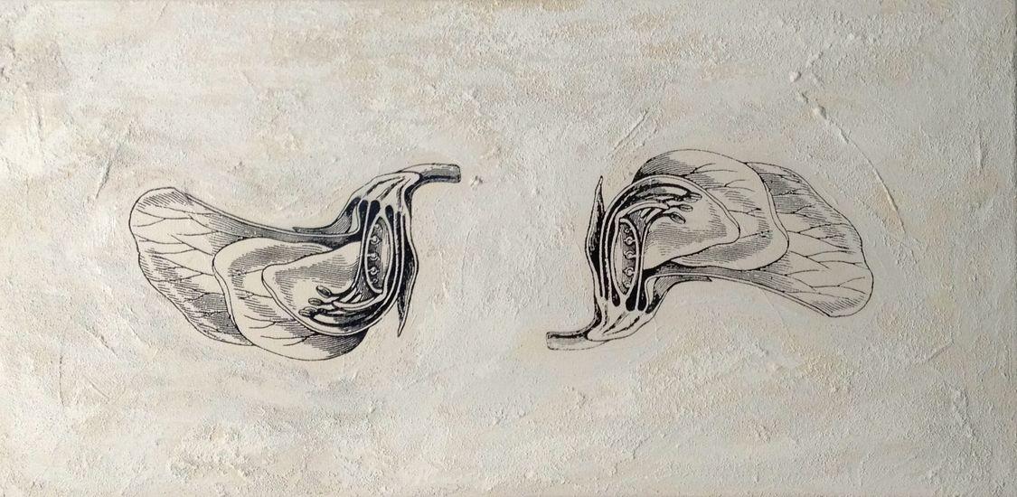 Calyciflorae -kaksisirkkaiset