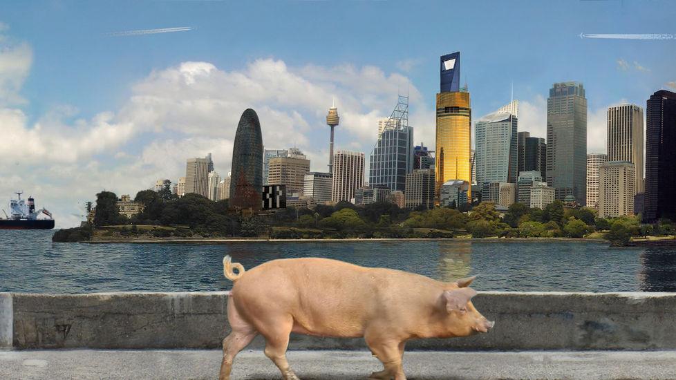 Pigwalk