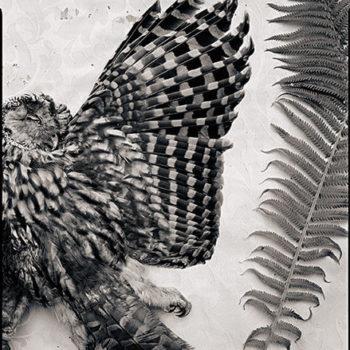 Teoksen nimi: Wings.2008