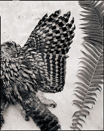 Wings.2008