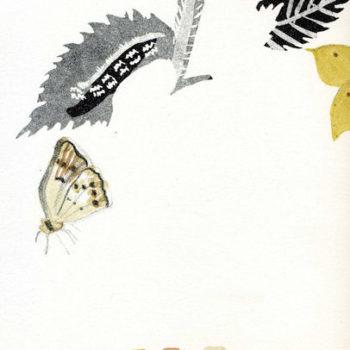 Teoksen nimi: Amor Unit (Rakkaus yhdistää Saaren kartanon kasvit ja perhoset)
