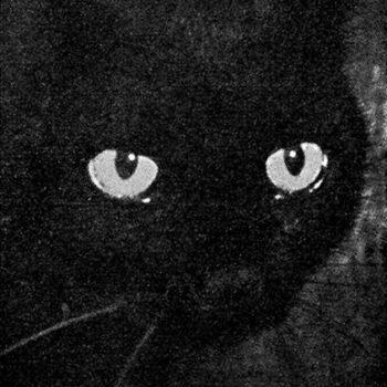 Teoksen nimi: Elämän ihmeet (Musta kissa)