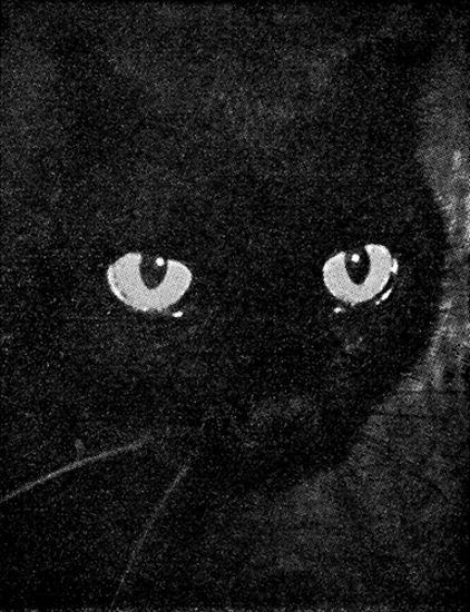 Elämän ihmeet (Musta kissa)