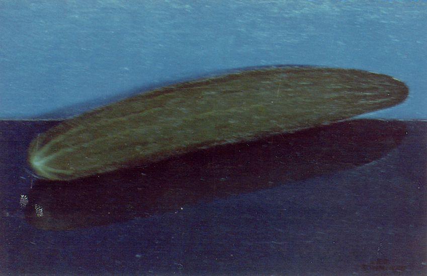 Kesäkurkku 1985