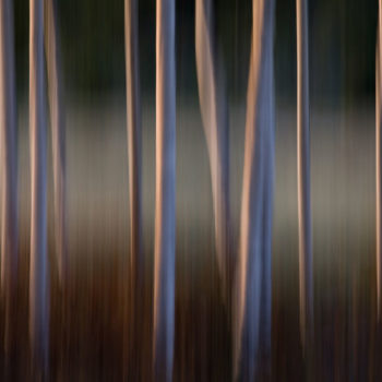Teoksen nimi: Forest #5, 2011, 100 x 128 cm