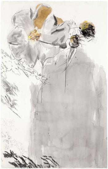Marian ruusu, 2011