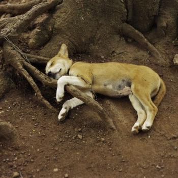 Teoksen nimi: Koira nukkuu,Ghana 1998