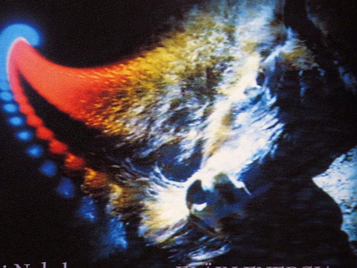 """""""Eläinenergia"""" videoinstallaatio 1995"""