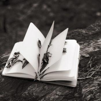 Teoksen nimi: Kirja, the Book, 2009