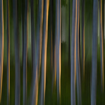 Teoksen nimi: Forest #6, 2011, 100 x 128 cm