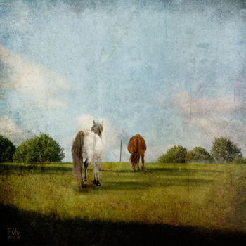 Teoksen nimi: Kesäpelto – hevosten loma