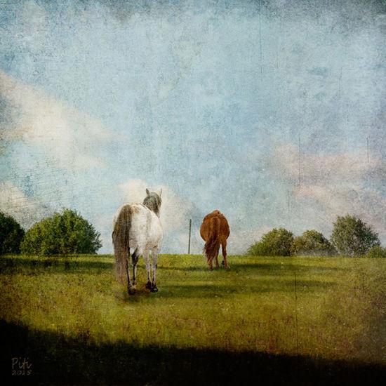 Kesäpelto – hevosten loma
