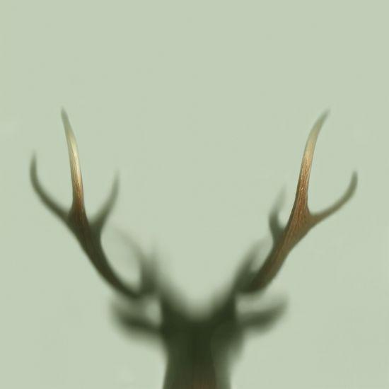 Eine Lebensgeschichte aus dem Walde, IV