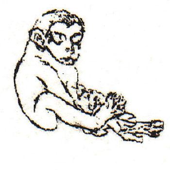 Teoksen nimi: Apina-lapsi