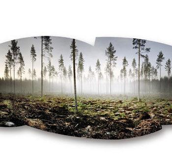 Teoksen nimi: Metsä, Ruovesi