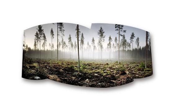 Metsä, Ruovesi