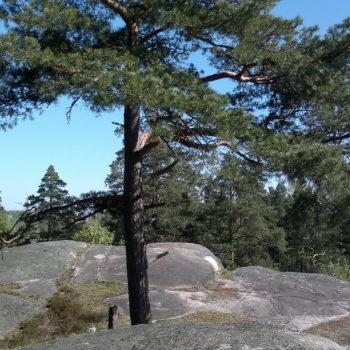 Teoksen nimi: Metsä, 2014 Urban forest, Helsinki